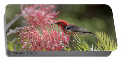 Scarlet Honeyeater Portable Battery Charger