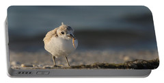 Snowy Plover Portable Battery Charger