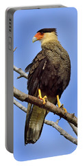 Portable Battery Charger featuring the photograph Southern Comfort by Tony Beck