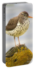 Spotted Sandpiper Portable Battery Charger