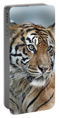 The Gaze Of A Tiger Portable Battery Charger by Jim Fitzpatrick