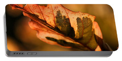 Tri-color Beech In Autumn Portable Battery Charger by Angela Rath