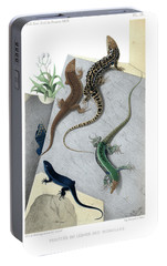 Portable Battery Charger featuring the drawing Varieties Of Wall Lizard by Jacques von Bedriaga