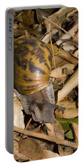 West African Giant Land Snail Portable Battery Charger