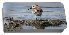 Portable Battery Charger featuring the photograph Western Sandpiper by Sue Harper