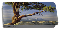 1m6701 Historic Jeffrey Pine Sentinel Dome Yosemite Portable Battery Charger