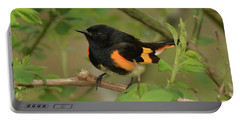 American Redstart Portable Battery Charger by Alan Lenk