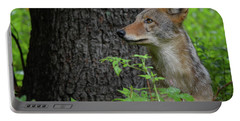 Early Morning Coyote In Maine Portable Battery Charger