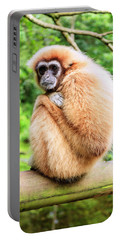 Portable Battery Charger featuring the photograph Lar Gibbon by Alexey Stiop