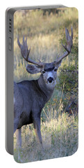 Portable Battery Charger featuring the photograph Looking Back by Shane Bechler
