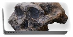 Designs Similar to Australopithecine Skull