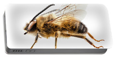 Bee Species Eucera Longicornis Common Name Solitary Miner Bee  Portable Battery Charger