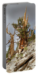 Bristlecone Pine Tree 2 Portable Battery Charger