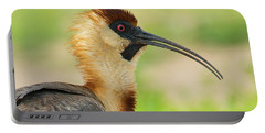 Buff-necked Ibis Theristicus Caudatus Portable Battery Charger