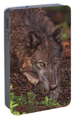 Portable Battery Charger featuring the photograph Zaltana  by Brian Cross