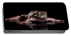 Australian Green Tree Frog, Or Litoria Caerulea Isolated Black Background Portable Battery Charger by Sergey Taran