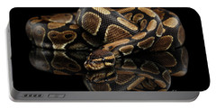 Ball Or Royal Python Snake On Isolated Black Background Portable Battery Charger