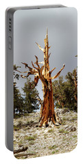 Bristlecone Pine Tree 1 Portable Battery Charger