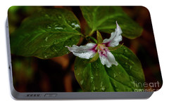 Portable Battery Charger featuring the photograph Painted Trillium  by Thomas R Fletcher