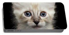Cute American Curl Kitten With Twisted Ears Isolated Black Background Portable Battery Charger by Sergey Taran