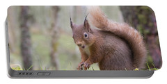 Red Squirrel - Scottish Highlands #8 Portable Battery Charger