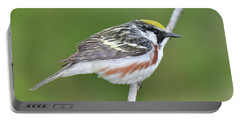 Chestnut-sided Warbler Portable Battery Charger by Alan Lenk