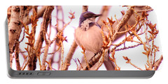 Western Scrub Jay Portable Battery Charger