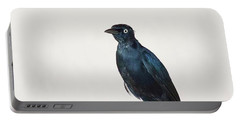A Carib Grackle (quiscalus Lugubris) On Portable Battery Charger