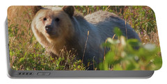 A  Female Grizzly Bear Looking Alertly At The Camera. Portable Battery Charger