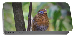 Portable Battery Charger featuring the photograph A Melodious Thrush by Judy Kay
