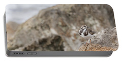 A Ruddy Turnstone Perched On The Rocks Portable Battery Charger