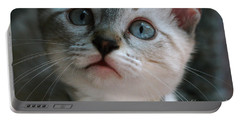 Portable Battery Charger featuring the photograph Adorable Kitty  by Kim Henderson