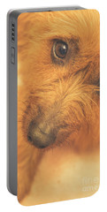 Adorable Small Pet Dog In Tones Of Red Portable Battery Charger