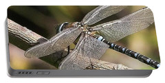 Aeshna Juncea - Common Hawker Taken At Portable Battery Charger