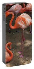 African Lesser Flamingos, Ft. Worth Zoo Portable Battery Charger