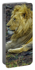 African Lion Resting Portable Battery Charger