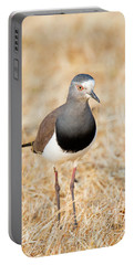African Wattled Lapwing Vanellus Portable Battery Charger by Panoramic Images