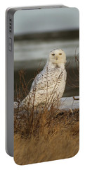 Alert Snowy Owl Portable Battery Charger