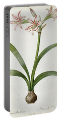 Amaryllis Vittata Portable Battery Charger by Pierre Redoute