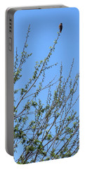 American Kestrel Atop Pecan Tree Portable Battery Charger