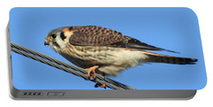 American Kestrel Portable Battery Charger by Kathy M Krause