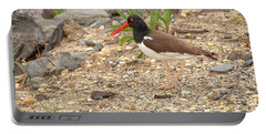 Portable Battery Charger featuring the photograph American Oystercatcher by Kristia Adams