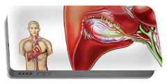 Anatomy Of Gall Bladder Ganglion Portable Battery Charger