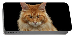 Angry Ginger Maine Coon Cat Gazing On Black Background Portable Battery Charger by Sergey Taran
