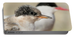 Arctic Tern Chick With Parent - Scotland Portable Battery Charger