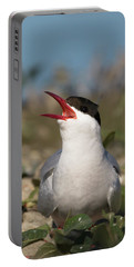 Arctic Tern - St John's Pool, Scotland Portable Battery Charger