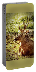 Portable Battery Charger featuring the photograph Autumn Colours Stag by Cliff Norton