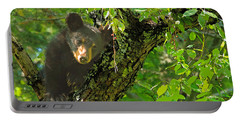 Portable Battery Charger featuring the photograph Baby Bear by Geraldine DeBoer