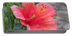 Portable Battery Charger featuring the photograph Baby Grasshopper On Hibiscus Flower by Nancy Nale