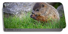 Baby Groundhog Eating Portable Battery Charger